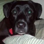 Animal Shelter Appreciation Week - Brody