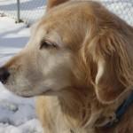 Natiofnal Animal Shelter Appreciation Week - Dori