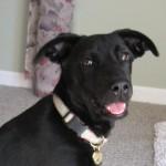 Animal Shelter Appreciation Week - Ella
