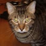 Animal Shelter Appreciation Week - Farley
