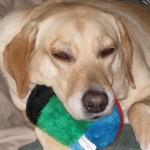 Animal Shelter Appreciation Week - Josie
