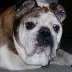 Animal Shelter Appreciation Week - Maggie
