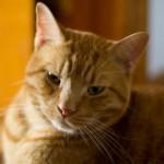 Animal Shelter Appreciation Week - Georgey